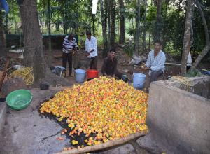 Cashew Fruit and Feni tour