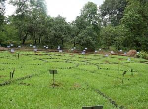 Nakshatra vann or astral garden